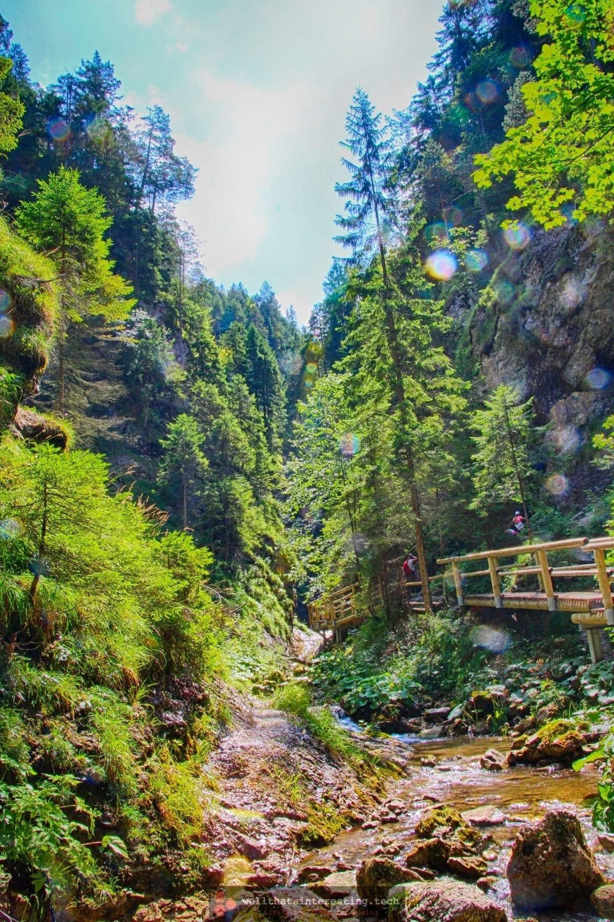 Valley trees and bridge at Jánošíkove Diery, Slovakia
