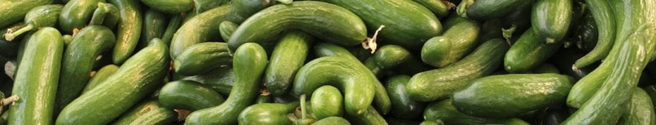 AI and healthtech. Cucumbers - AI and agriculture, Digitial Tech Saves Lives, AI and the Ocean, Tech With Purpose News Tech 4 Good